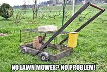 Nature's Lawn Mowers