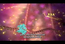 Biologia / Ribossomo e Síntese proteica