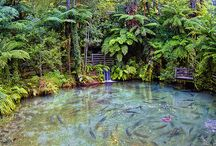 Beautiful nature / by Ciara Brash