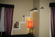 Cats home ideas