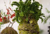 Växter och trädgård