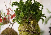 Kokadama & Succulents