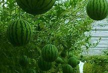 Frutas & Flores Exóticas