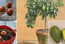 planten kweken