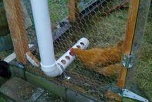 Hønseopdræt