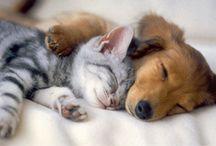 Animals are amazing!