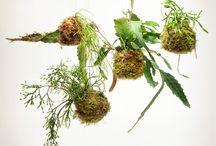 musgo plantas
