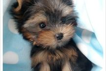 Little Pup Scruffies / The cutest baby puppies alive / by Colleen Phelan