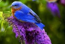 Birds and Habitats / by Judith Ayers