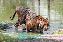 Safari World Bangkok / The Kingdom of Thailand is the most popular tourist destination in South East Asia. We Tour Thailand provides travel services in Thailand, Bangkok, Pattaya etc.