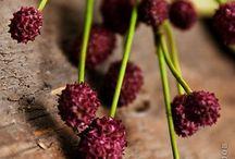 цветы мк керамика и мастика
