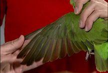 Bird Grooming / Grooming Info