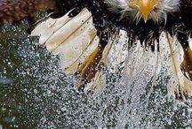grand et beau oiseau