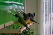 κλουβιά για πουλιά