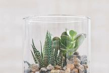 terrarium kaktus