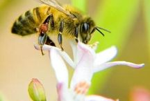 Beautiful Bees / by Megan Hively
