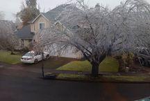 Instagram https://www.instagram.com/p/BOCzDoqhEBD/ December 15, 2016 at 11:00AM #icetree in the neighborhood