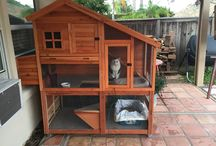 house for pets