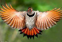 Birds / by Martha Coye