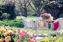 Backyard Beauties  / Outdoor living areas!