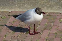 Vogels gespot / Vogels op foto vastgelegd