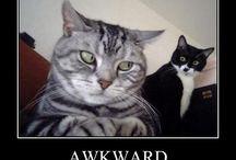 Things that make me laugh:)