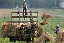 Amish / by June Kay Mackey