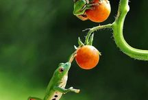 Frogs / by Leslie Phillips