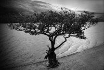 Fekete-fehér fotók / Black and white  foto / .