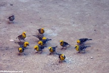 Birds / by Ena Newell