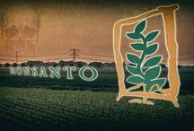 GMO, Monsanto