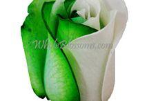 Wholesale flowers for Saint Patrick's / by WholeBlossoms Wholesale Wedding Flowers