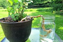 Water for gardens & pots