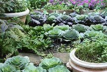 Edible gardens / by Kristin Zaruba