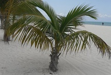 Palm Trees / by Kathy Fulkerson