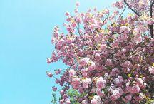 Flori din calimara