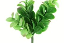 Succulents - Permanent Botanicals