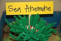Preschool theme ocean
