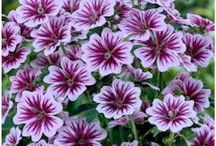 Perennials with summer bloom