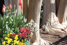 Spring at the Garden / Spring blooms at the San Antonio Botanical Garden / by San Antonio Botanical Garden