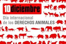 animalove