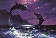 dolphins#mermaids