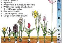 garden ideas and stuff