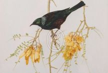 New Zealand Birds / This page features a collection of artworks of native birds that are available for sale.