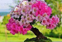 Floral  / by Megan Kimmel