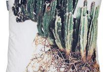 Cactus / Plant of 2014?! / by Geschikt Groen Geschikt