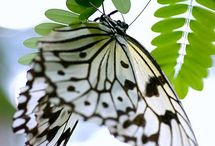 Butterflies & Nature Things