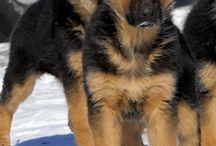 Pups / by Kyla Rector