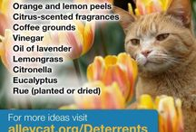 humane cat deterrents