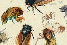 Art: Fauna